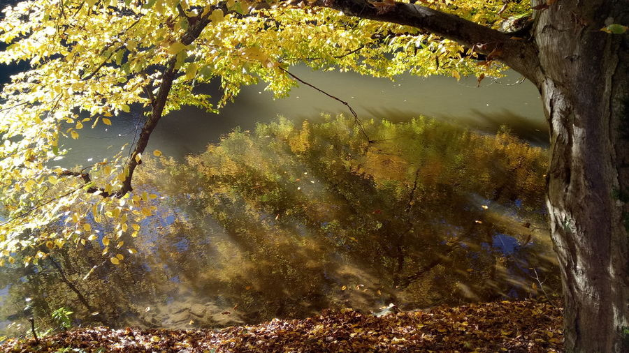 Nature No People Full Frame Day Outdoors Water Beauty In Nature Branches Leaves Autumn Colors Autumn🍁🍁🍁