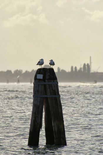 Seagulls On Wooden Post In Sea Against Sky