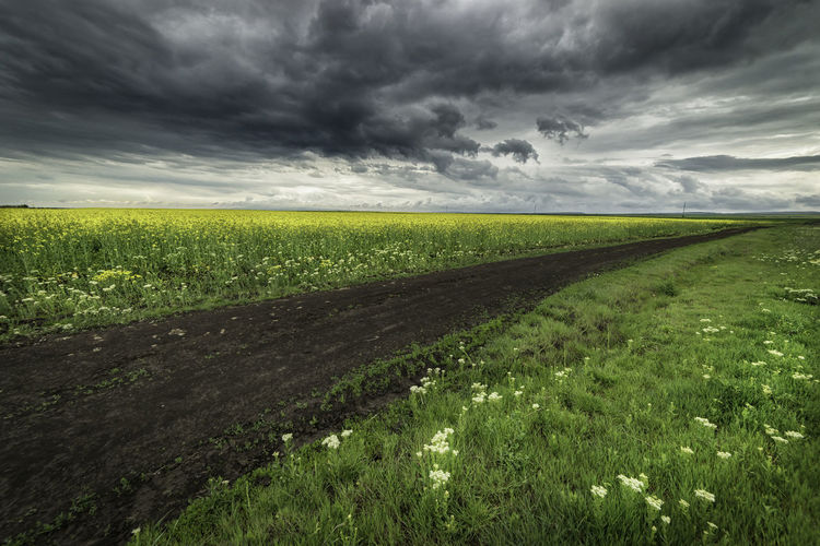 Agriculture Beauty In Nature Cloud Cloud - Sky Clouds Clouds And Sky Colza Cultivated Land Dramatic Sky Field Flower Grass Grassy Green Color Landscape_photography Lanscape Nature RapeFlowers Rural Scene Weather Yellow