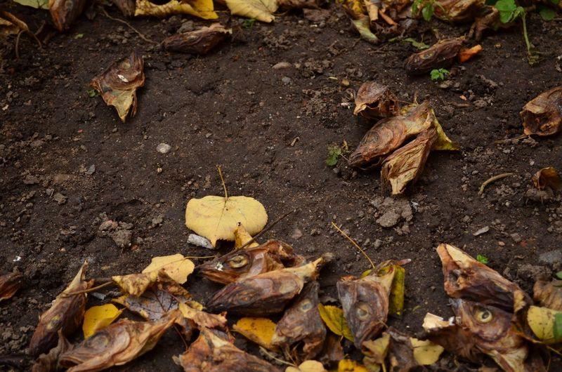 Autumn Leaves Fishhead Ground Fallen Leaf Fish
