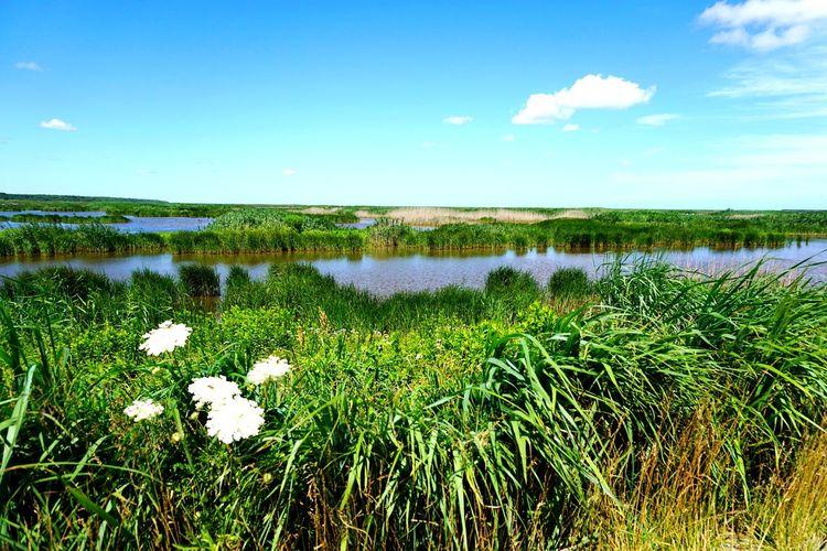 wetlands Blue Sky Wetlands Sky Clouds Grassland Clouds And Sky Sky And Clouds Water Flower Sky Grass Landscape Green Color