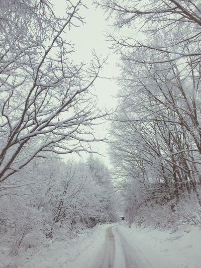 Snow Winter View WHiTE WORLD Nature Photography Snow Mountain White