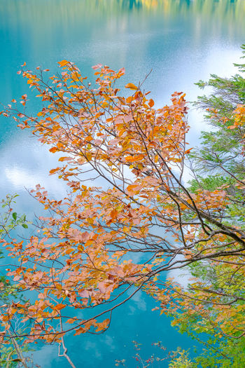 Low angle view of autumn tree by lake against sky