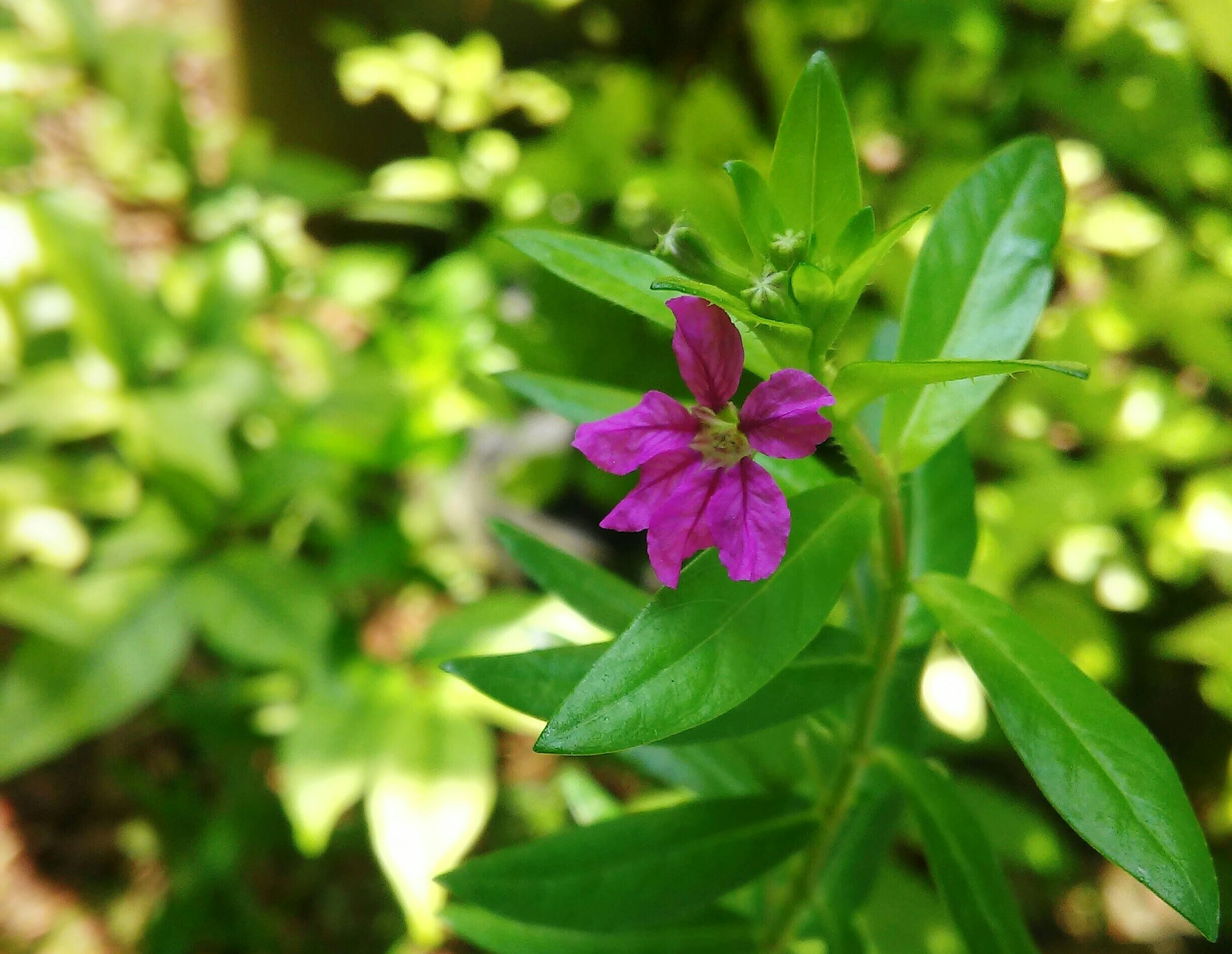 flower, freshness, growth, petal, fragility, leaf, beauty in nature, flower head, pink color, plant, nature, blooming, close-up, green color, focus on foreground, purple, in bloom, park - man made space, outdoors, pink