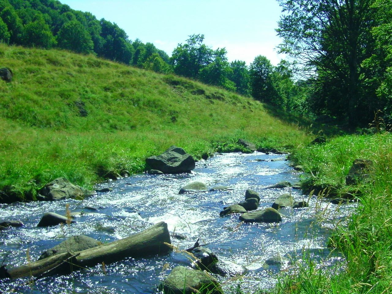 nature, stream, tranquil scene, no people, water, day, grass, tranquility, landscape, beauty in nature, growth, outdoors, scenics, green color, tree, forest