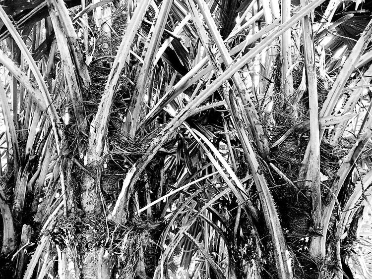 Tree Tree Photography Tree_collection  Trunk Tree Trunk Tree Trunk Collection Tree Trunk Art Close Up Trunk Nature Nature Photography Tree Art Tree Abstract Nature Abstract Nature Art Close Up Photography Black And White Black And White Tree Black And White Photography ใน Bangkok, Thailand
