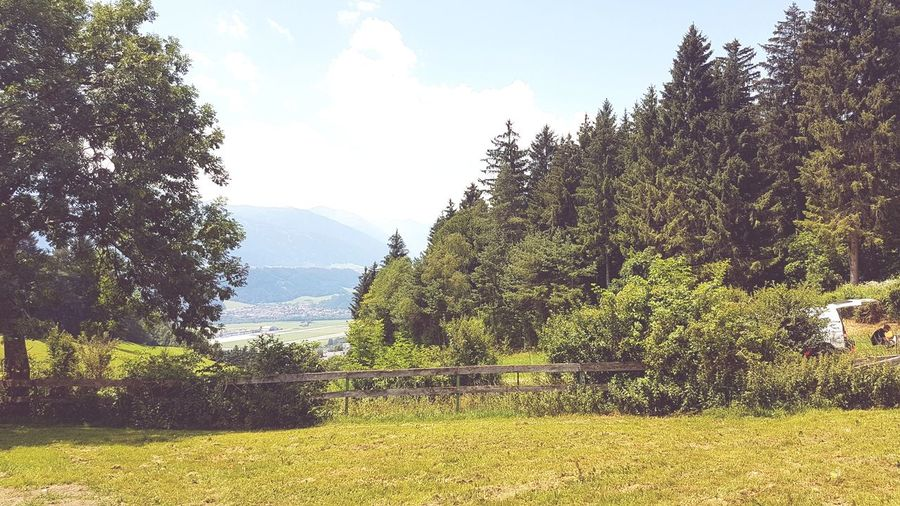 farm Austria EyeEm Gallery EyeEm Selects Tirol  Frost Nature Mobilephotography Mobile Phone Mobilephoto Sky_collection Wiesenblume Wiese  Wiesengras L Tree Sunlight Sky