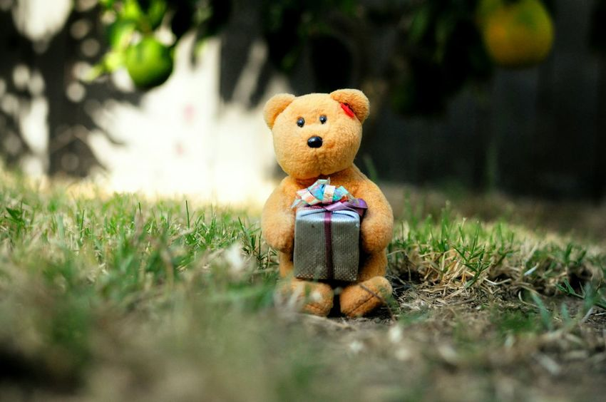 Anonymousnate Showcase: November Photography Picturing Individuality Nature Cloesup Teddybear Bear Outdoor Photography