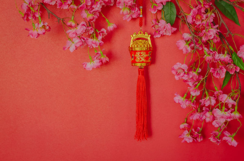 Close-up of pink flowering plant against red wall