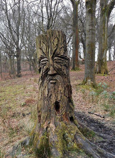 Land Tree Trunk