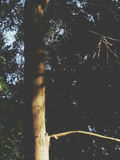 🌳 Tree Trunk Nature Landscape Forest