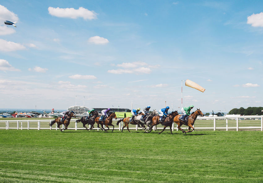 Epsom Downs Racecourse Event Horse Horse Race Horse Racing Horse Riding Race Track Riding