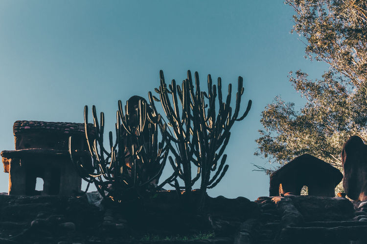 Cactus in park against clear sky