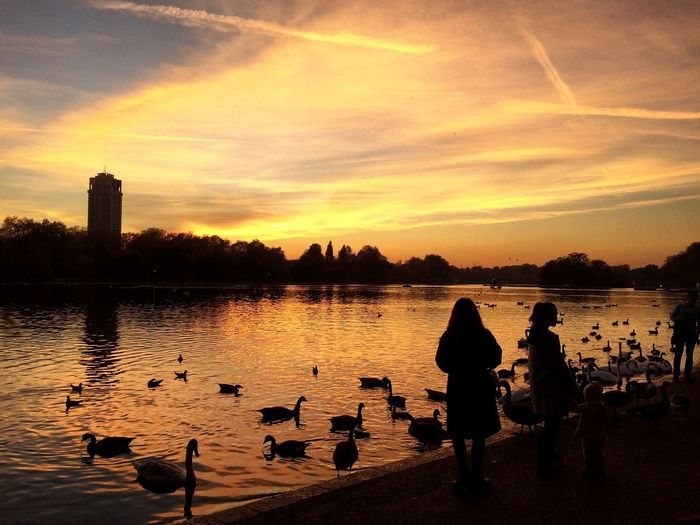 Birds Swimming In Lake By People Against Cloudy Sky At Hyde Park During Sunset