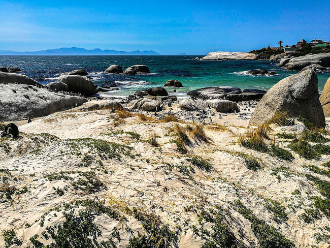 Sea Beach Sunlight Nature High Angle View Outdoors No People Beauty In Nature Day Sky Water Scenics Sand Large Group Of Animals Horizon Over Water Cape Town, South Africa Capetown Boulders Beach Nature Animal Themes Clear Sky Wave Splashing Landscape_Collection Landscape