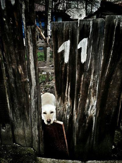 Animals Dog Love Animal_collection Hello World