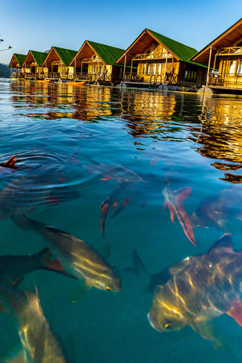 Floating bangalows at cheow lan dam or ratchaprapa dam in surat thani, thailand