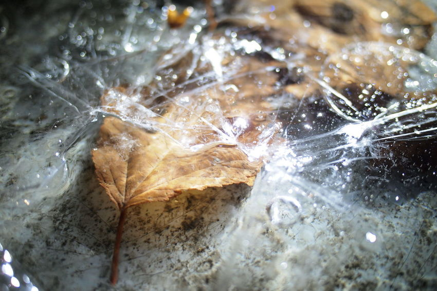 Frozen Close-up Day Freshness Indoors  Leaf Motion Nature No People Water