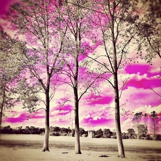 Le monde est pink... Itsapinkworld Pink