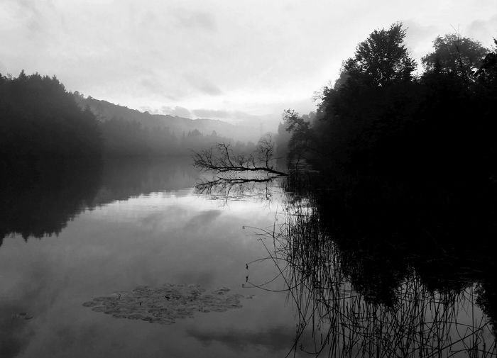 """"""" River You`ll Be MIST """" * * * River Mist Rising Beauty In Nature Fog Hazy  Hazy River Lake No People Outdoors Reflection Reflection Lake Scenics - Nature Tranquil Scene Tranquility Tree Water"""