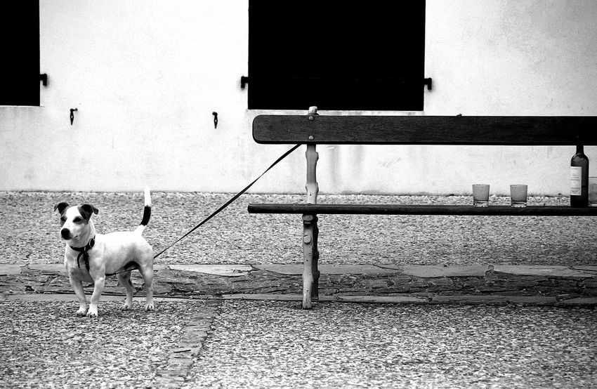 Street Photography Nikonfr Blackandwhite Photography Day Outdoors Street Life Streetphoto_bw Streetphotography The Street Photographer - 2016 EyeEm Awards The Portraitist - 2016 EyeEm Awards Dog Dog Love Dog Life Bench Wineglass Wine Bottle The EyeEm Collection Wine Not