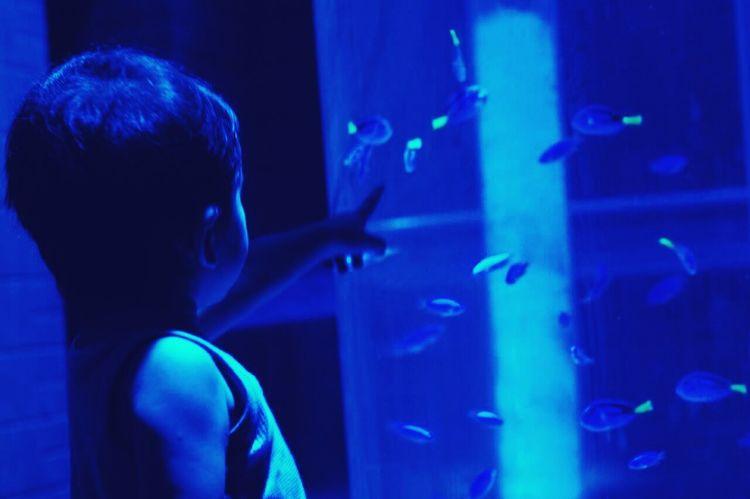 Baby Boy Blue Aquarium