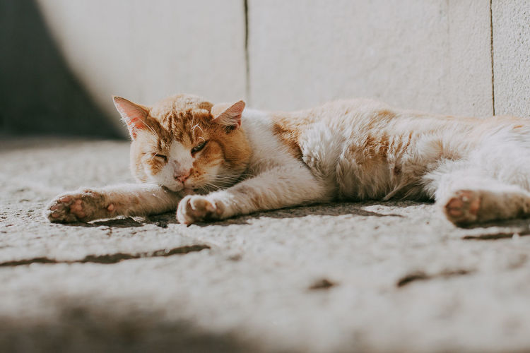 Cat Domestic Cat Pets Relaxation Animal Themes Resting Ginger Cat Looking At Camera Sleeping SPAIN