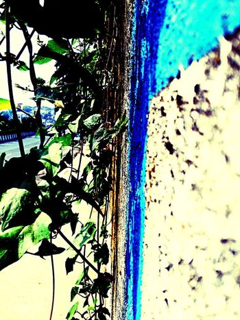 Beauty in a dirty wall outside my flat...just need to open our eyes and see the beautiful world... Enjoying The View
