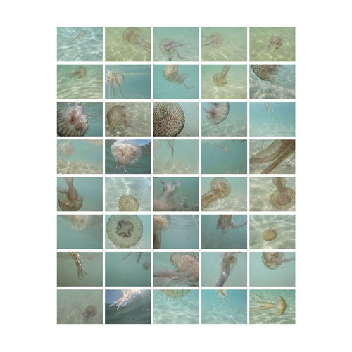 Group of jellyfishes in the sea bathing the French Riviera (France) Gelly Fish  No People Studio Shot Large Group Of Objects Pattern Variation Nature Animal Still Life Order White Background Close-up Seascape Fish Fishing Atlantic Ocean Pacific Ocean Shoreline Europe France Mediterranean Sea Green Color Eyyem Naure Lover EyeEm Selects EyeEm Gallery