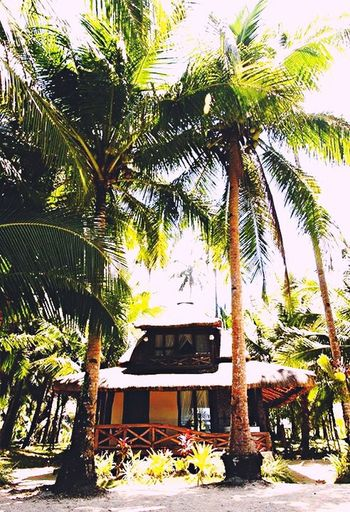 Happy Trees Coconut Trees Beach Day Beachvilla Goodvibes✌️ Feeling Thankful Feeling Good No People Only Me Stressedout Freshness No More Words