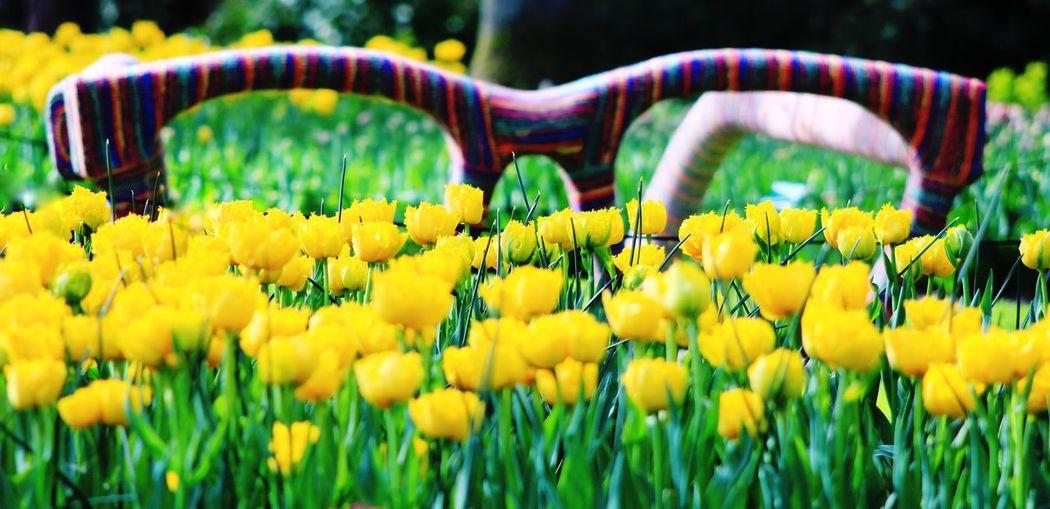 Flower Yellow Season