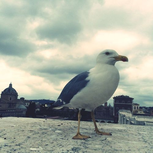 Pascarusul Birds Sky