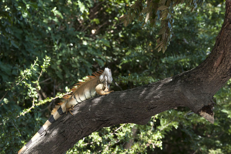 Cat relaxing on tree trunk