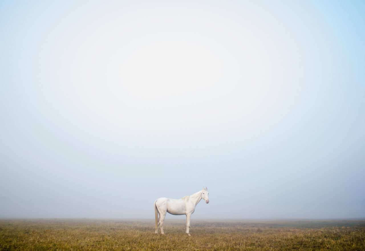 Horse standing on field against clear sky