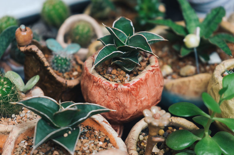 Close-up of potted plants growing on pebbles