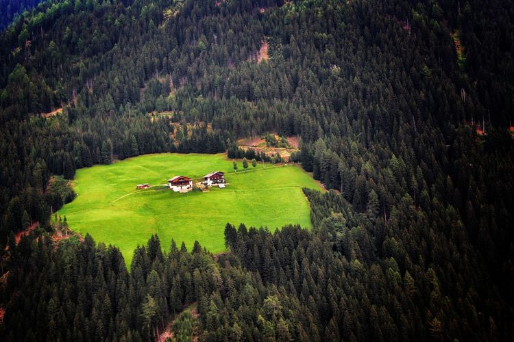 High Angle View Of Trees Growing On Field At Cortina D Ampezzo