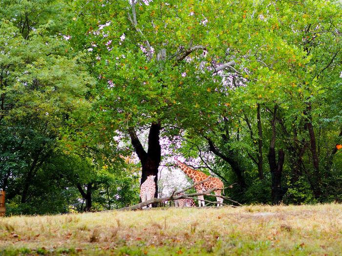 Woman by tree on field