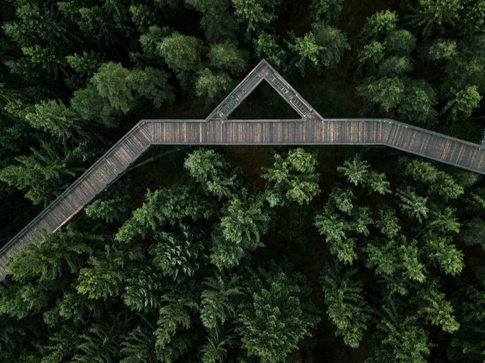 Aerial of a treetop walkway in a pine forest crossing with a road Architecture Bridge - Man Made Structure Built Structure Connection Covered Bridge Day Forest Green Color Growth Nature No People Outdoors Plant Tree