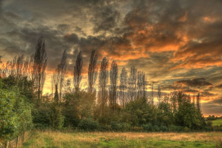 Bromsgrove Worcestershire Uk Beauty In Nature Cloud - Sky Day Fields And Sky Grass Growth Landscape Nature No People Outdoors Poplar Trees Power In Nature Scenics Sky Sunset Tranquil Scene Tranquility Tree