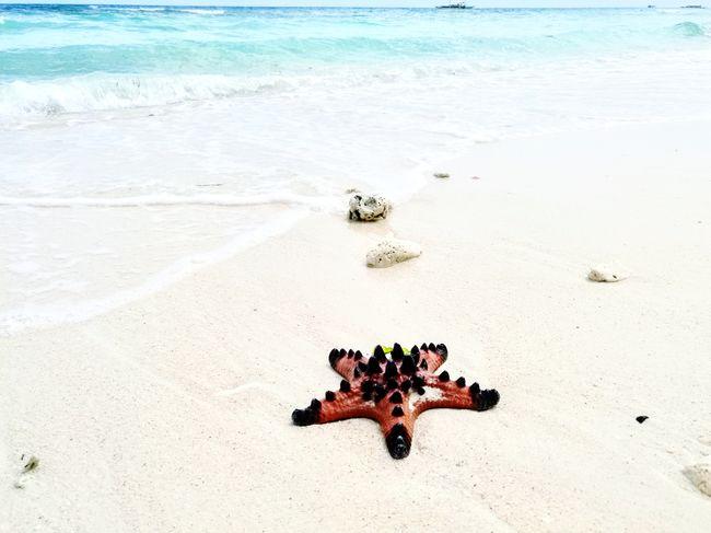 Beach Sand Sea Philippines Island Home On My Back Travel