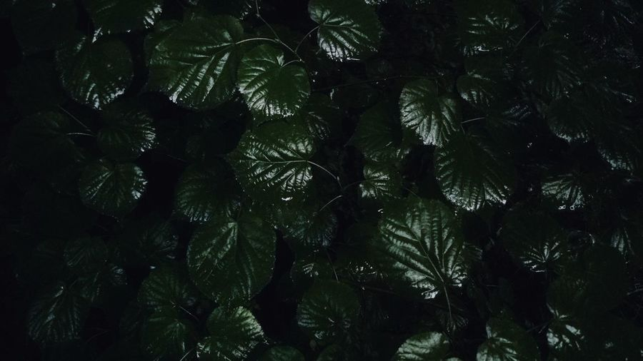 Low angle view of wet leaves