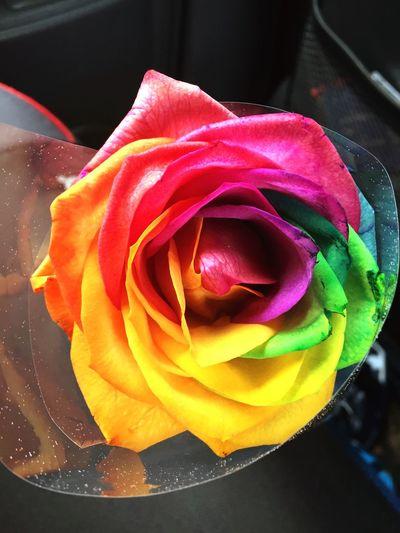 Photographic Memory follow the rainbow 🌈🌈🌈 RainbowRose Rosé