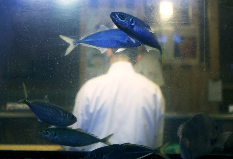Cooking Sushi Swimming Animals In The Wild Aquarium Chef Day Fish Fish Tank Fishing Nature Sea Life Swim Swimming Under The Sea Water The Week On EyeEm Editor's Picks Business Stories An Eye For Travel