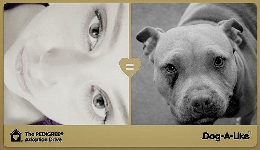 Me = Pitbull Dog-A-Like Selfie Dog