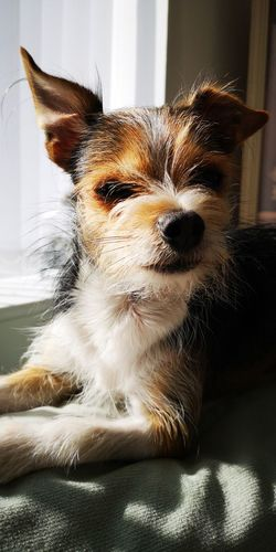 Pets Portrait Dog Domestic Room Home Interior Looking At Camera Cute Close-up