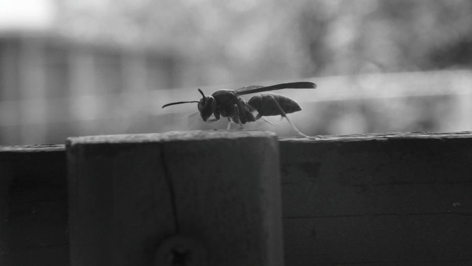 Wasp Bee Hanging Out Check This Out Wasp Macro Cheese! Bugs Black And White Front Porch Scottdale Cedar Street