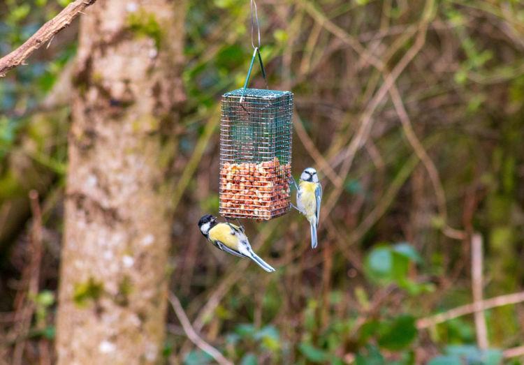 Birds Bird Bird
