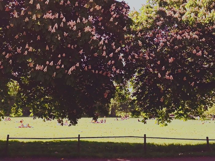 Spring On The Common Claphamcommon Park Trees People People Watching Blooming United Kingdom London London lifestyle Shadows Green Color EyeEm Best Shots EyeEm Nature Lover EyeEm Best Shots - Landscape EyeEm Best Edits Tree Water Sky Visual Creativity