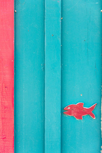 Funny Golden Fish Fish Red Day Close-up No People Wood - Material Full Frame Blue Architecture Wall - Building Feature Built Structure Outdoors Green Color Backgrounds Entrance Pattern Door Turquoise Colored Wooden Decoration Architectural Detail Peeling Off