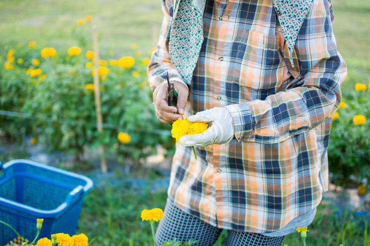 Midsection of farmer with marigold standing on farm